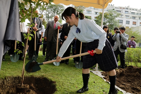 Rina Matsumoto, Student Sakura team leader from Fukushima, plants a cherry tree at the OECD headquarters on the occasion of the Tohoku Cherry Blossom Ceremony, 2 September 2014.