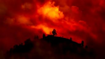 Shutterstock 1476127844 Hill with trees about to burn in red, orange wildfire TheVagabond V.Schaal