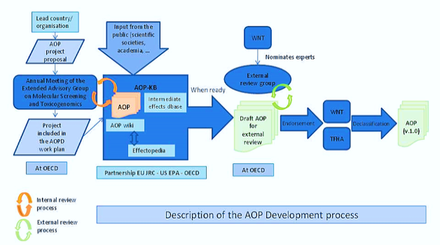 AOP Description of the development process