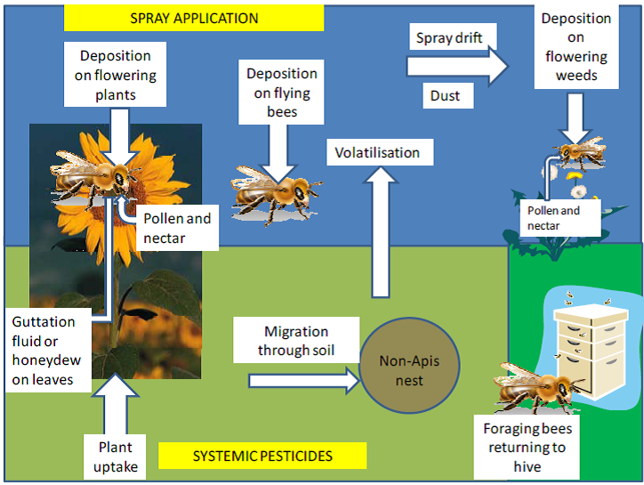 This figure presents the major routes of exposure of foraging bees to pesticides.