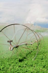 Pesticides wheel spraying