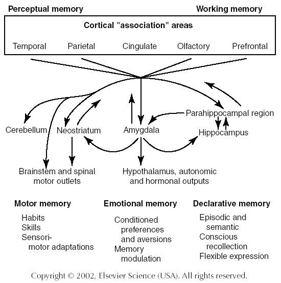 what is the relationship between learning and memory